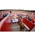 End of Running of the Bulls and Heifers